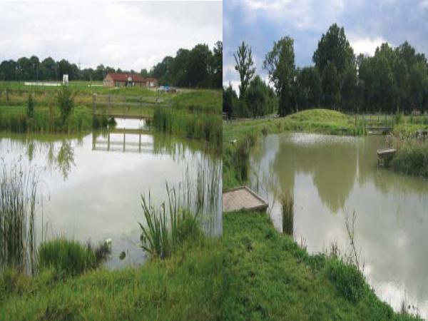 Photographs courtesy of The Billinghurst Community Partnership
