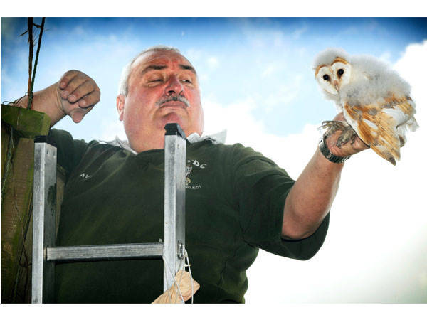 Aylesbury Vale barn owl project