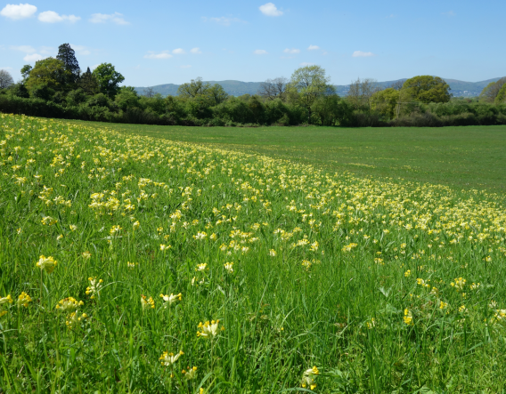 Boynes Meadow. Image courtesy of Wendy Carter and Worcestershire Wildlife Trust